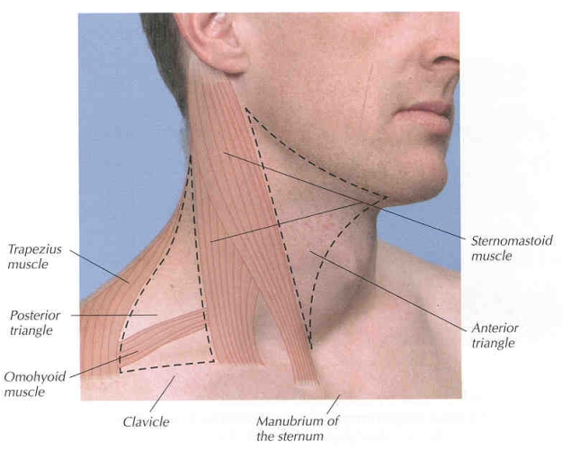 Swollen Lymph Nodes Back of Neck