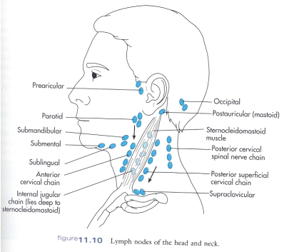 Enlarged Posterior Auricular Lymph Node http://www10.homepage.villanova.edu/marycarol.mcgovern/2104/headneck2.htm